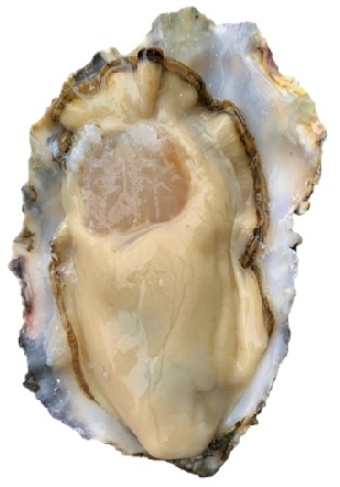 milk_oysters_m